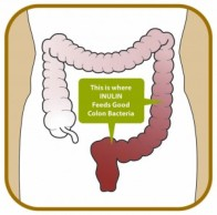 inulin-bacteria